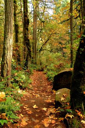 Today's Primal Activity: Hiking LacamasPark